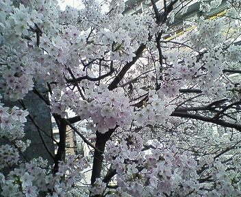 サイタ、咲いた。